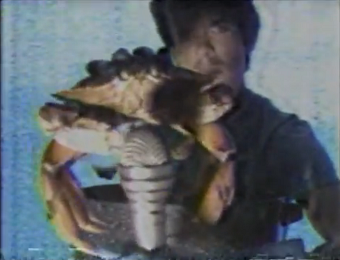 Enrico and the crab 2
